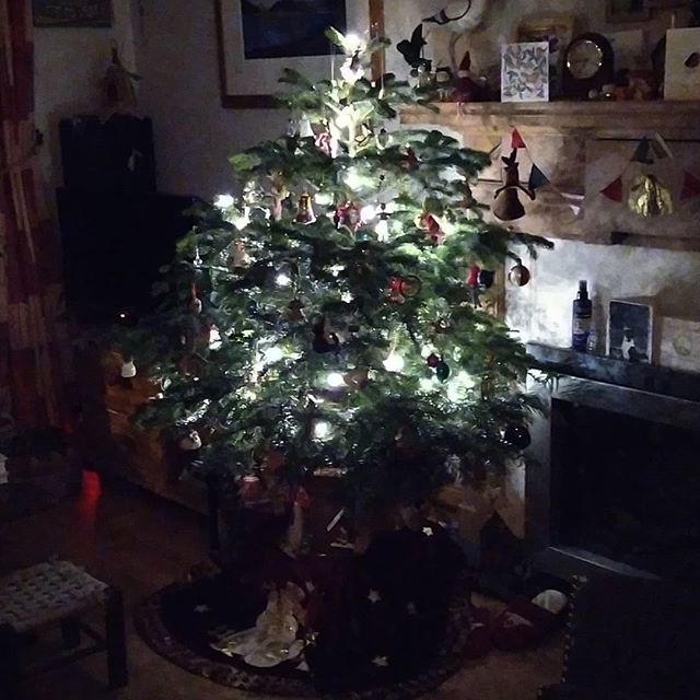 Twinkly lights this morning… #StillChristmas