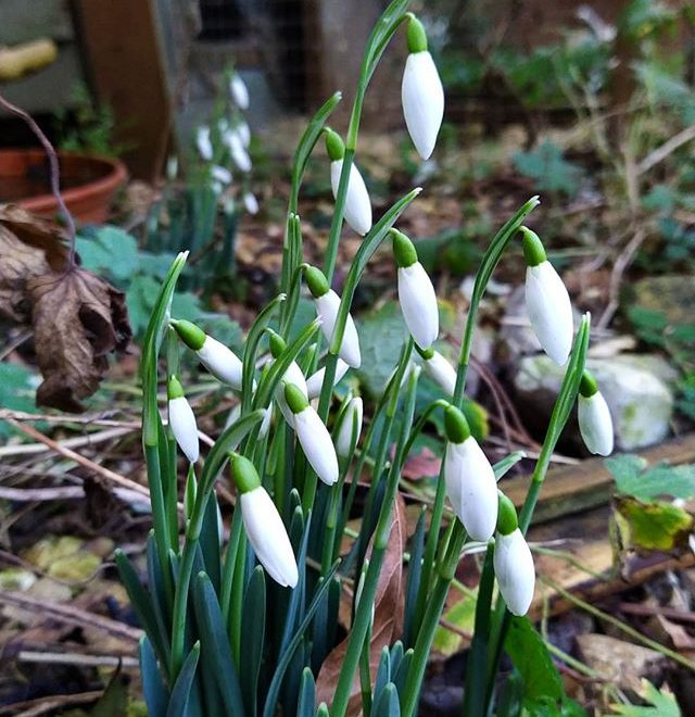 Signs of Spring… #garden #SpringIsComing #SpringFlowers