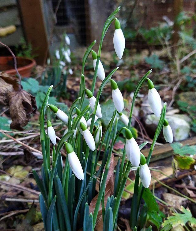 Signs of Spring... #garden #SpringIsComing #SpringFlowers
