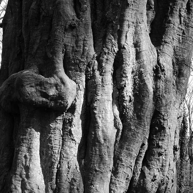 Woodland textures… #woods #WythamWoods @wytham_woods